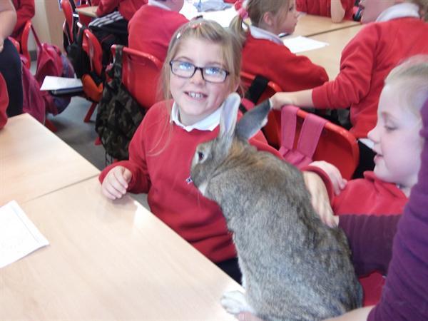 Springer the rabbit