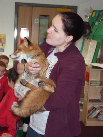 Linnie the fox
