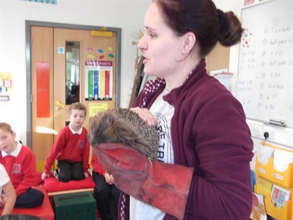 Thorn the hedgehog