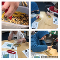 Which Finch beak is the best for small seeds and why?