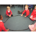 making 2D shapes with the raccoon circle