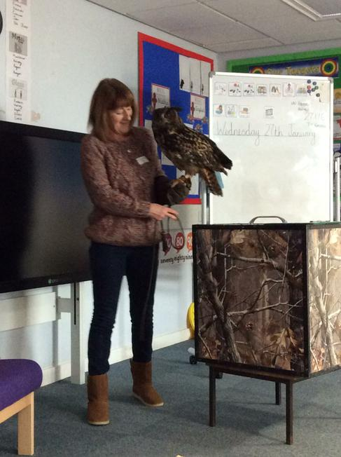 He name was Edward the European Eagle Owl.