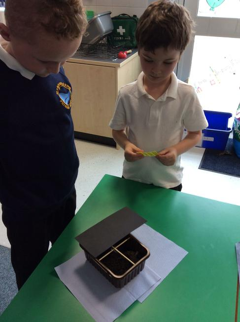 The woodlice had 4 chambers to choose from.
