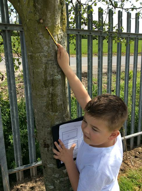 We went on a bug hunt around our school.