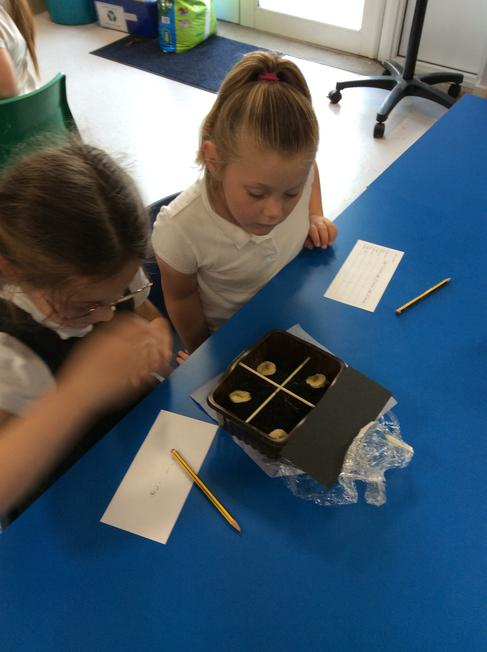 Woodlice prefer dark and moist conditions.