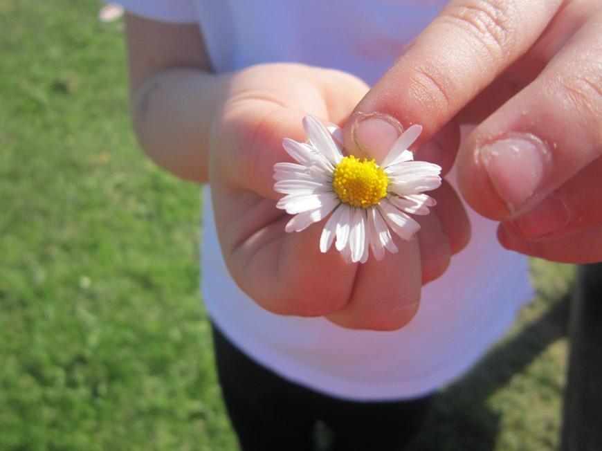 The enchanted daisy!