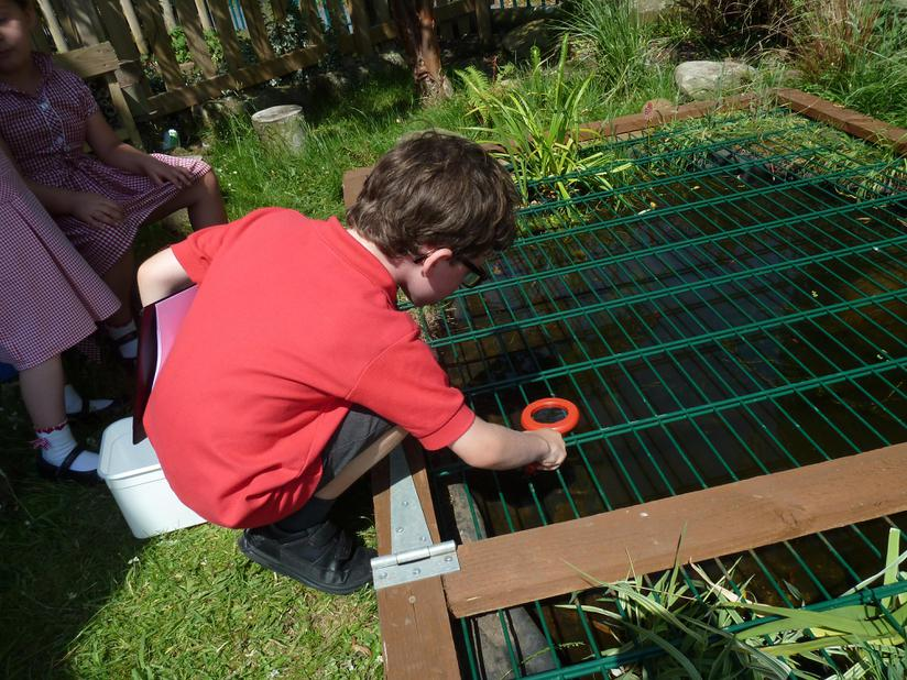 Pond dipping in our new Wildlife Pond