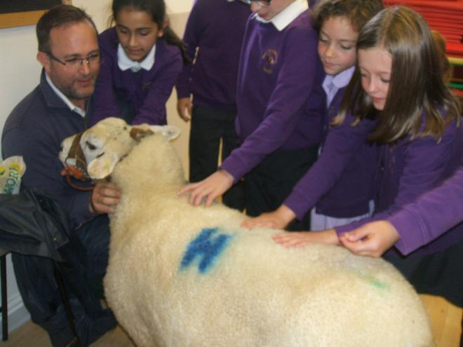 Meet Heidi the sheep