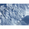 Samuel's snow writing of 'oy' words.