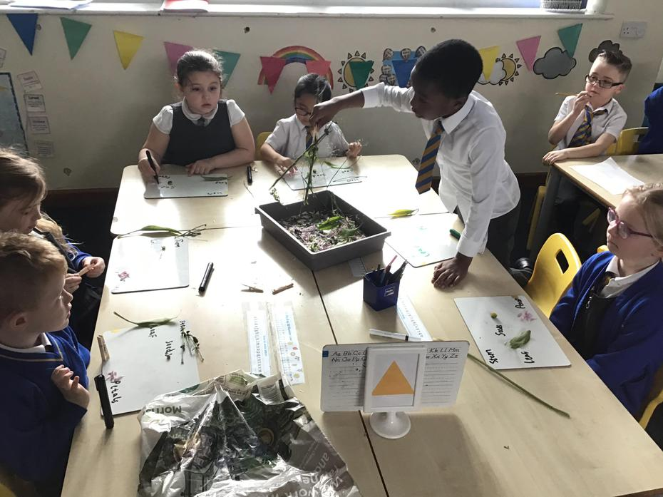 We looked at the different parts of plants.