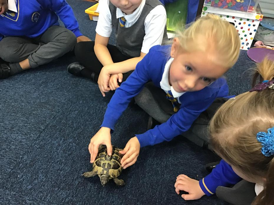 We loved the tortoise coming to school!