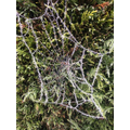 Icy spider web...