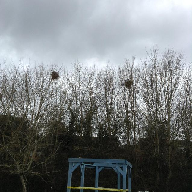Bird nests in the trees