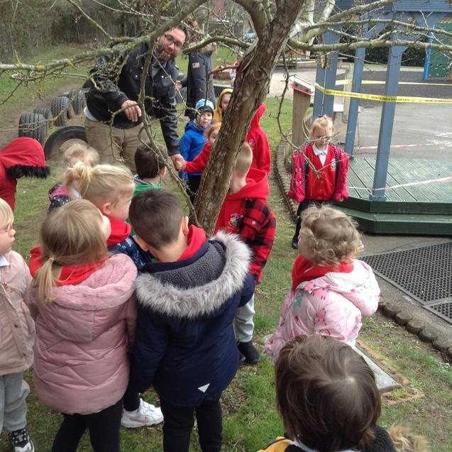 Looking at buds on the tree branches