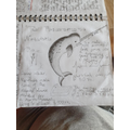 Viki's (4R) narwhal research.
