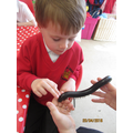 Albert touching an African millipede