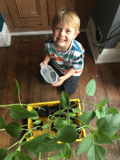 Baird watering his sunflowers!