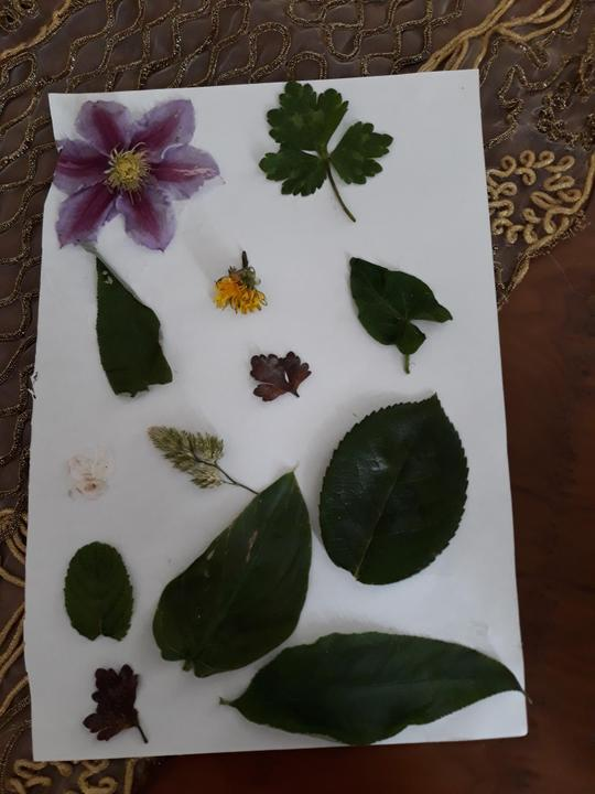 Lamis is able to name parts of a plant.