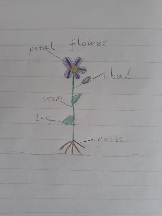 Lovely drawing of a flower Lamis!