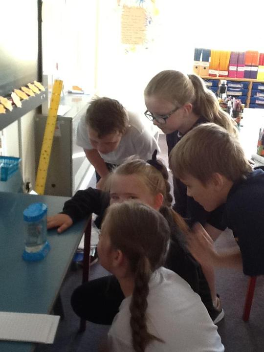 We love looking at the Sea Monkeys to see how much they have grown.