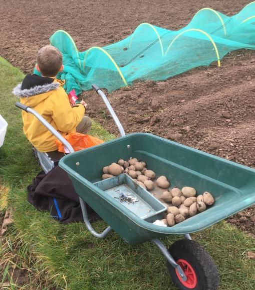 Dillon Planting Potatoes