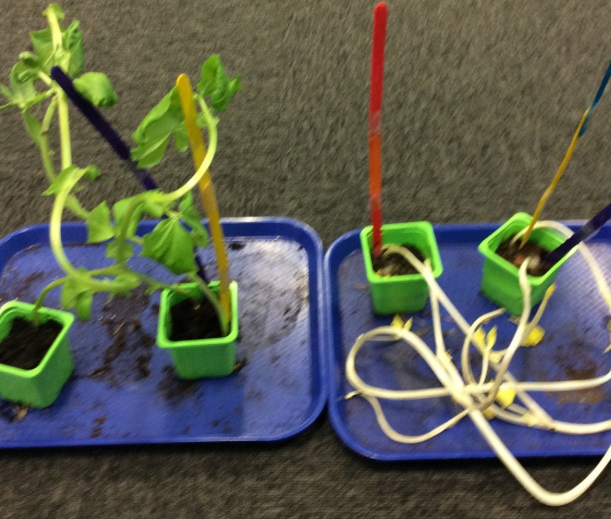 Investigating Where Plants Grow Best