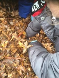 Investigating our leaf mould bin
