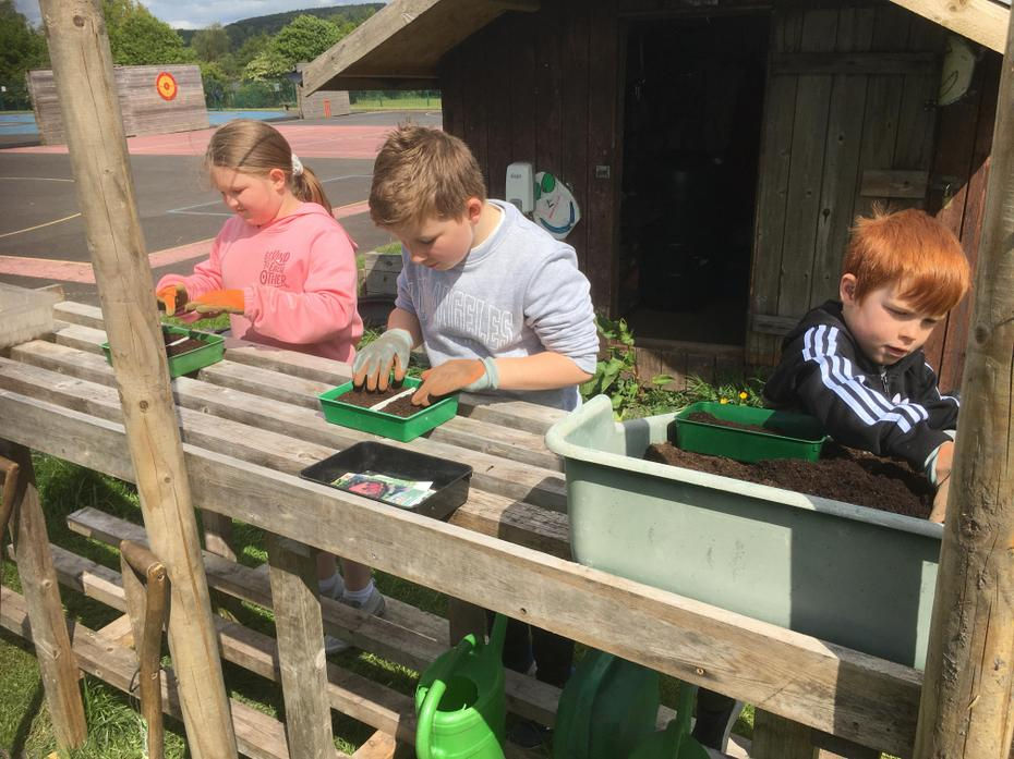 Planting bean seeds 13/5