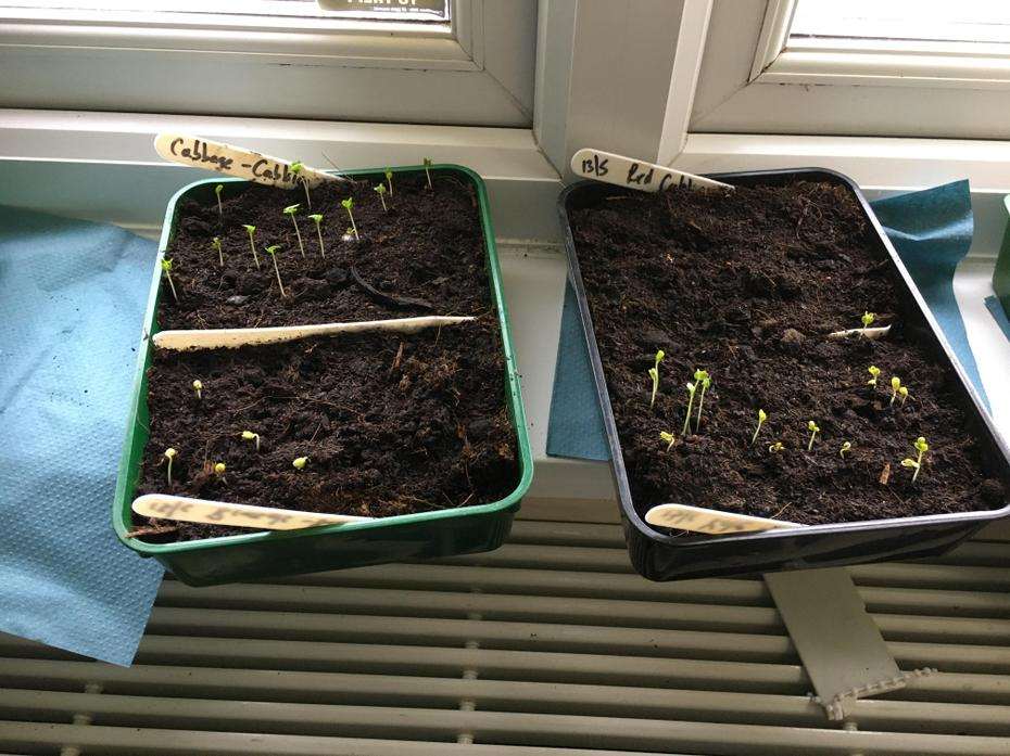 Seeds have sprouted 19/5