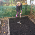 Raking the soil level