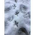 whose footprints are these?