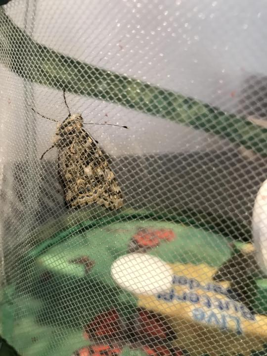 Miss Wilson woke up this morning to find number 5 out of the cocoon