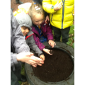 We have been planting bulbs.