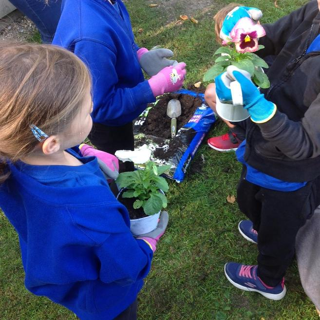 Planting the flowers!