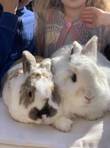 Meet Fluffy & Miffy
