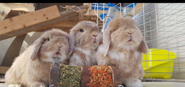 Meet Pickles, Lola & Merlin