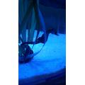 Tiny seahorses.