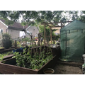 Lily's vegetable patch