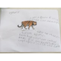 Tiger by Harry