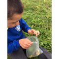 Collecting flowers form our forest school area to make sun catchers for our class windows