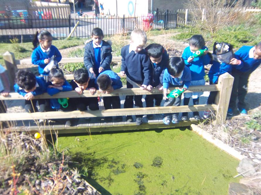 We were very excited to see tadpoles hatching from the frogspawn in our pond.