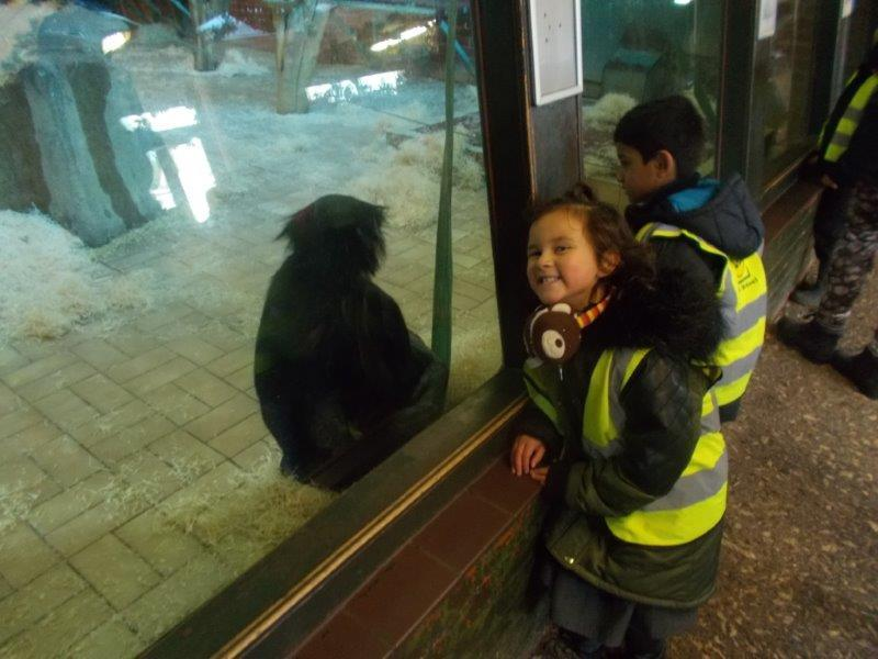 The chimpanzee was friendly.