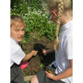 Yr 4 sow seed to encourage insects