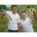 our Garlic crop