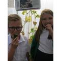2015 Cucumber harvest