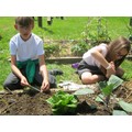 Year5 sow seeds