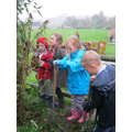 Weeding ang pruning with year 3
