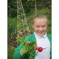 year 4 harvest radishes