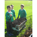 year 4 collecting leafs