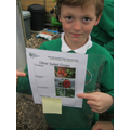 Planning our vegetable plot for this year